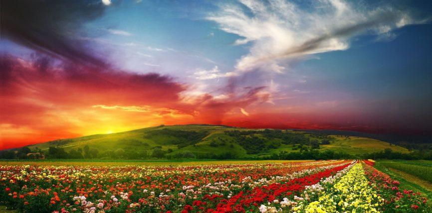 Sa herë përmendet fjala lumturi në Kuran ?