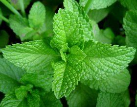 Bimët që shërojnë pagjumësinë