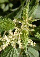 Bimë që ndalojnë rënien e flokut