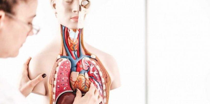 Sa vërtet kushton jeta? Shikoni çmimin e implantimit të çdo organi në trup
