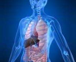 A lejohet dhurimi i organeve pas vdekjes?