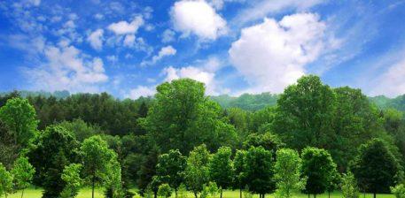 Histori domethenese! 4 femijet dhe pema ne 4 stinet e ndryshme…