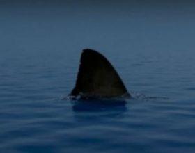 Krijesa më e rrezikshme në Tokë s'është peshkaqeni, madje as vetë njeriu!