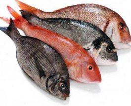 Peshku ,vlerat e larta ushqyese