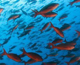 Si jetojnë peshqit në ujë?