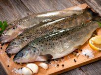 Roli i peshkut në organizmin e njeriut