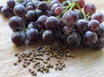 Vaji i farave të rrushit me vlera kuruese