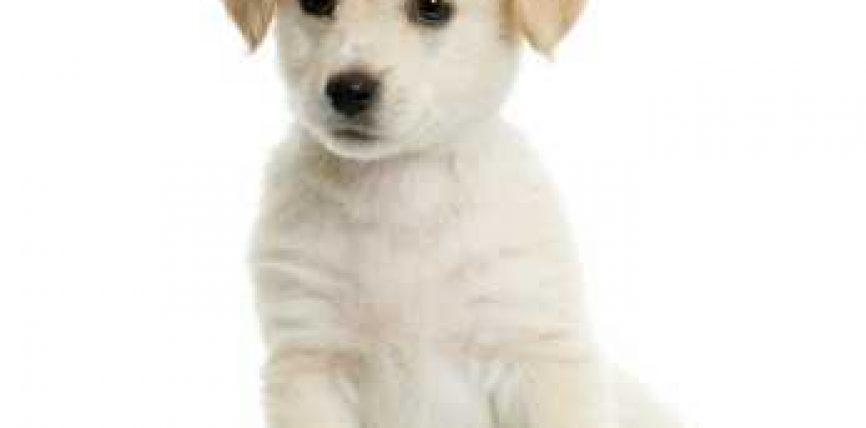 A lejohet mbajtja e qenit ne shtepi?