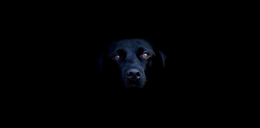 Qeni i zi është shejtan