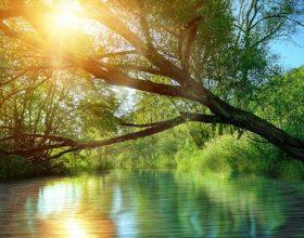 Qetësia shpirtërore