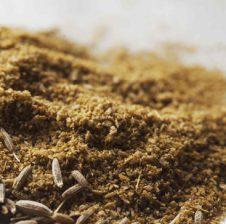Qimon kimjan – Benefitet që marrim nga kjo erëz