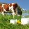 Dobitë e qumështit