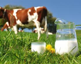 Pini qumeshtin e lopes, ngase lopet ushqehen me gjitha llojet e barit