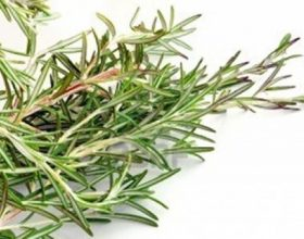 Për kujtesën, frymëmarrjen, reumatizmën përdorëni këtë bimë