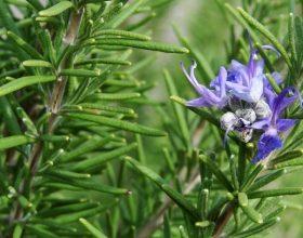 Bimët që ndalojnë rënien e flokut