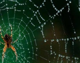 Mrekullia e rrjetës së merimangës