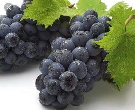 Rrushi- Ndër frytet qé Përmendet në Kur'an
