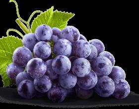 Rrushi, çelësi i dyerve të meditimit