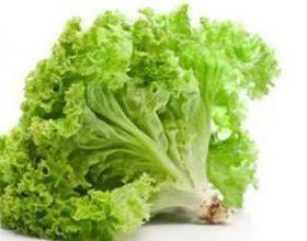 Sallate e gjelbër