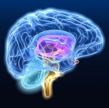 Si t'a shërojmë migrenën me vaj të kokërrës së zezë (nigella sativa) ?