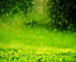 Për ta larguar shejtanin nga trupi, nevojitet shiu …