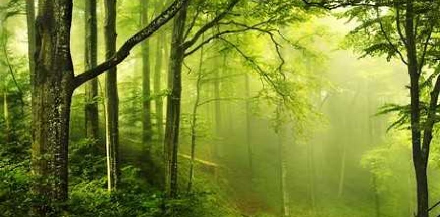 Si mund të dëshmoni ekzistencën e botës së amshuar?