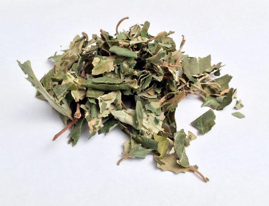 Shërimi i sihrit me gjethe sena dhe sidër