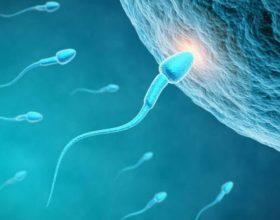 Sperma e njeriut përbëhet