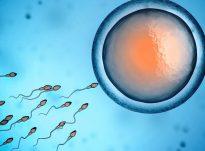 Sperma e njeriut përbëhet nga: