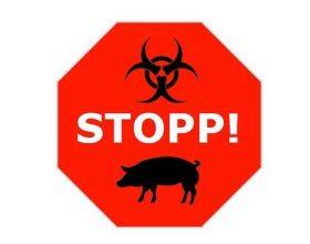 Përse nuk lejohet mishi i derrit në Islam?