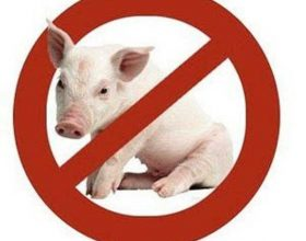 5 kategoritë e kafshëve të ndaluara