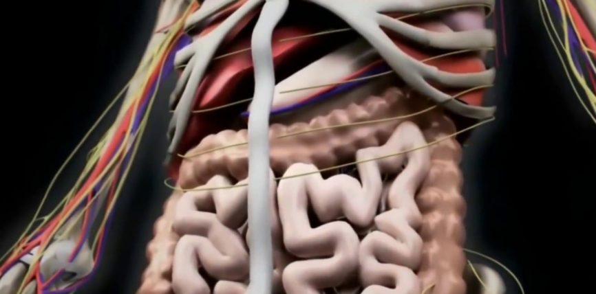 Studimi i fundit-Mrekullite e agjerimit ne trupin e njeriut