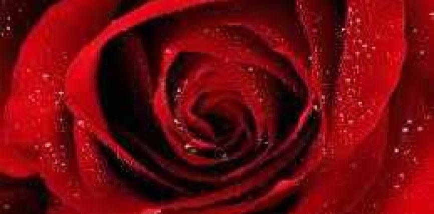 A është sunnet që bashkëshorti të lozë me gruan dhe ta ledhatojë atë para marrëdhënieve seksuale?
