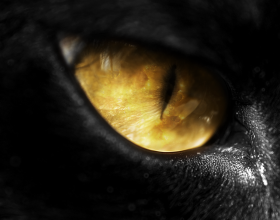 Simptomat e Syrit të Keq