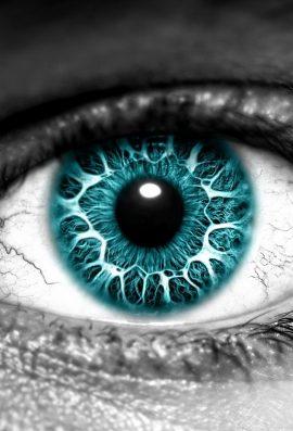 Ruajtja e syve