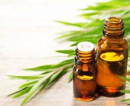 Tea Tree Oil për te ndihmuar lëkurën e yndyrshme dhe me akne