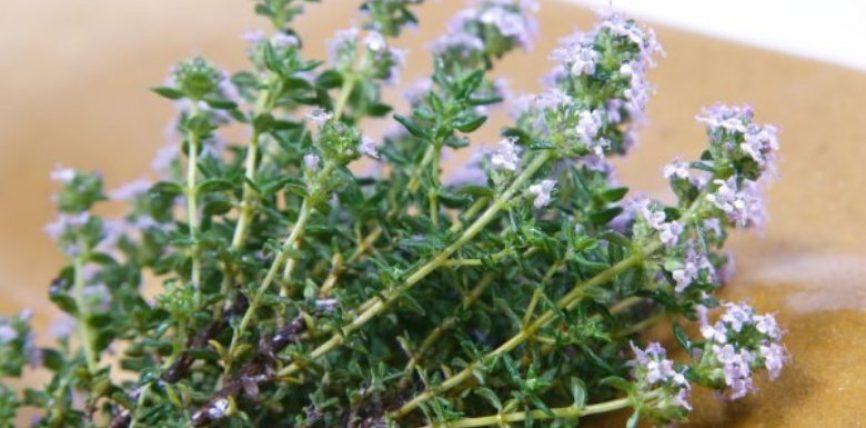 Trumza – Ilaqi më i mirë kundër akneve, recetë