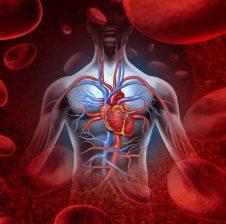A e dini se çfarë përmban gjaku?! Informacione që do ju mahnitin