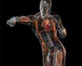 Si të veprojmë kur ndjejmë dhimbje në trup?Në këndvështrim profetik!