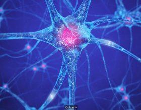 Pse qelizat nervore nuk ndahen ?