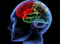 Konflikti mes mendjes dhe epshit