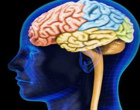 Si e zhvillon vitamina C trurin?