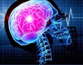 Fakte mahnitëse për trurin