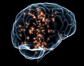 Pjesët kryesore të trurit
