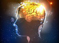 Të ushqyerit e trurit