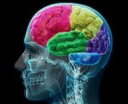 Kurani për trurin