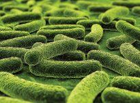 Gjithçka që duhet të dini rreth tuberkulozit