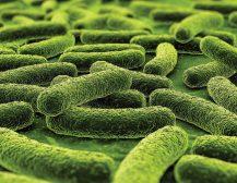 Si trajtohet tuberkulozi ?