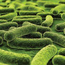 Tuberkuloza e mushkërive