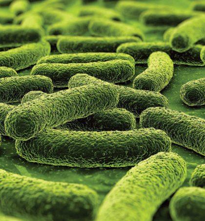 Shkaktari i tuberkulozit është…